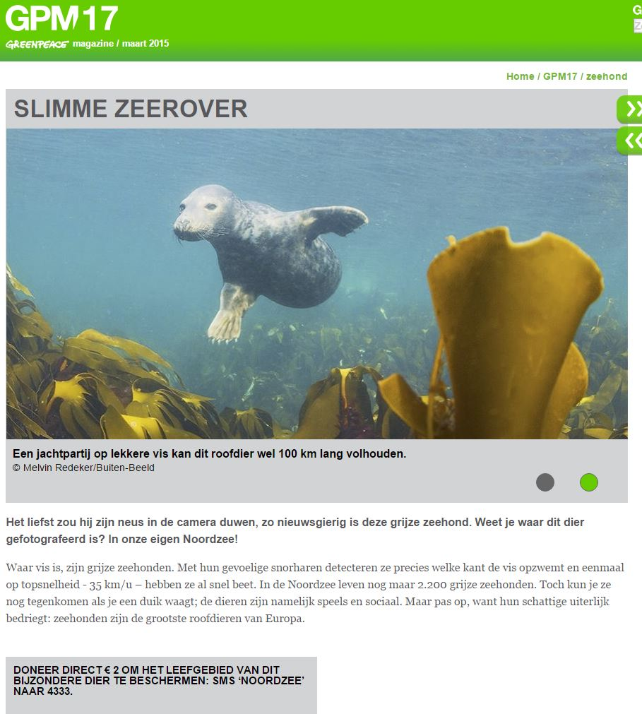 greenpeace zeehond noordzee campagne