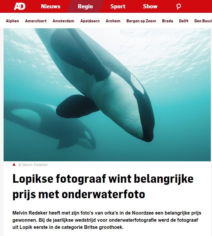 AD nl orkas onderwater in de Noordzee