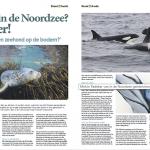 In de Noordzee in de Krant van de aarde - orka's in de Noordzee