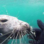 Zeehond als duikvriend