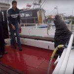 zeehond klimt aan boord