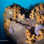 Duiken met windkracht 8 in de Noordzee - melvin-redeker