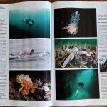 Duiken Magazine orka's in de Noordzee 3