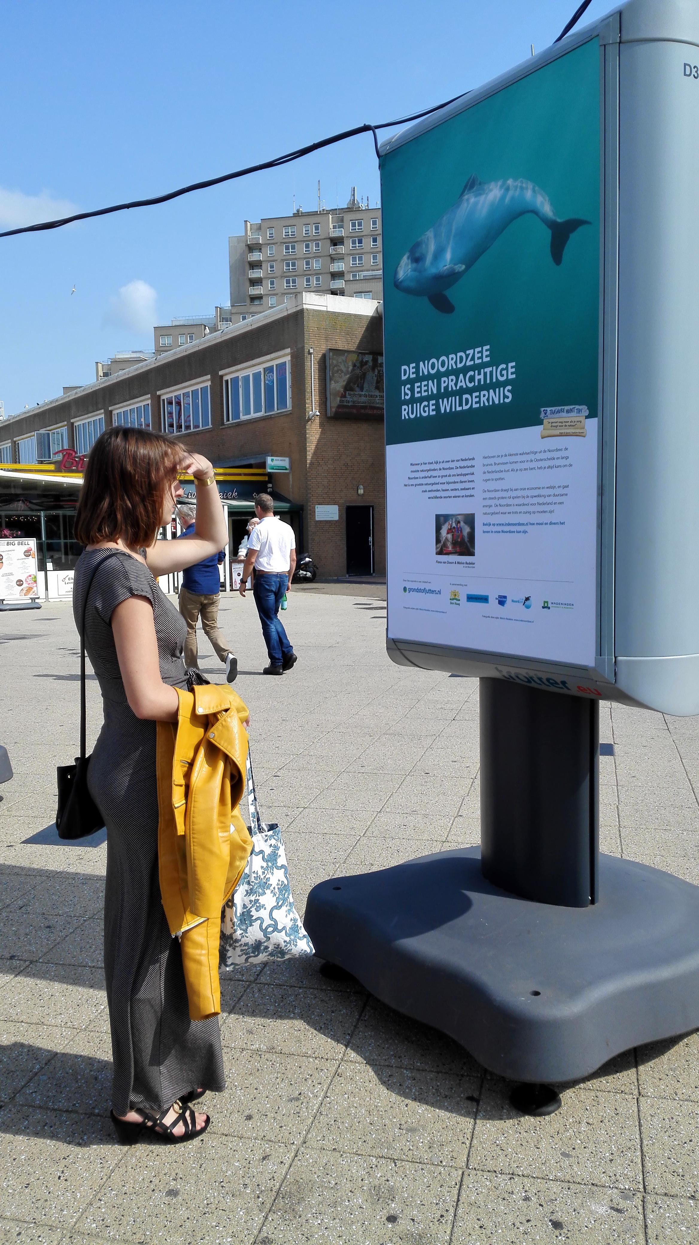 Bruinvis in de Noordzee bij foto expositie Scheveningen