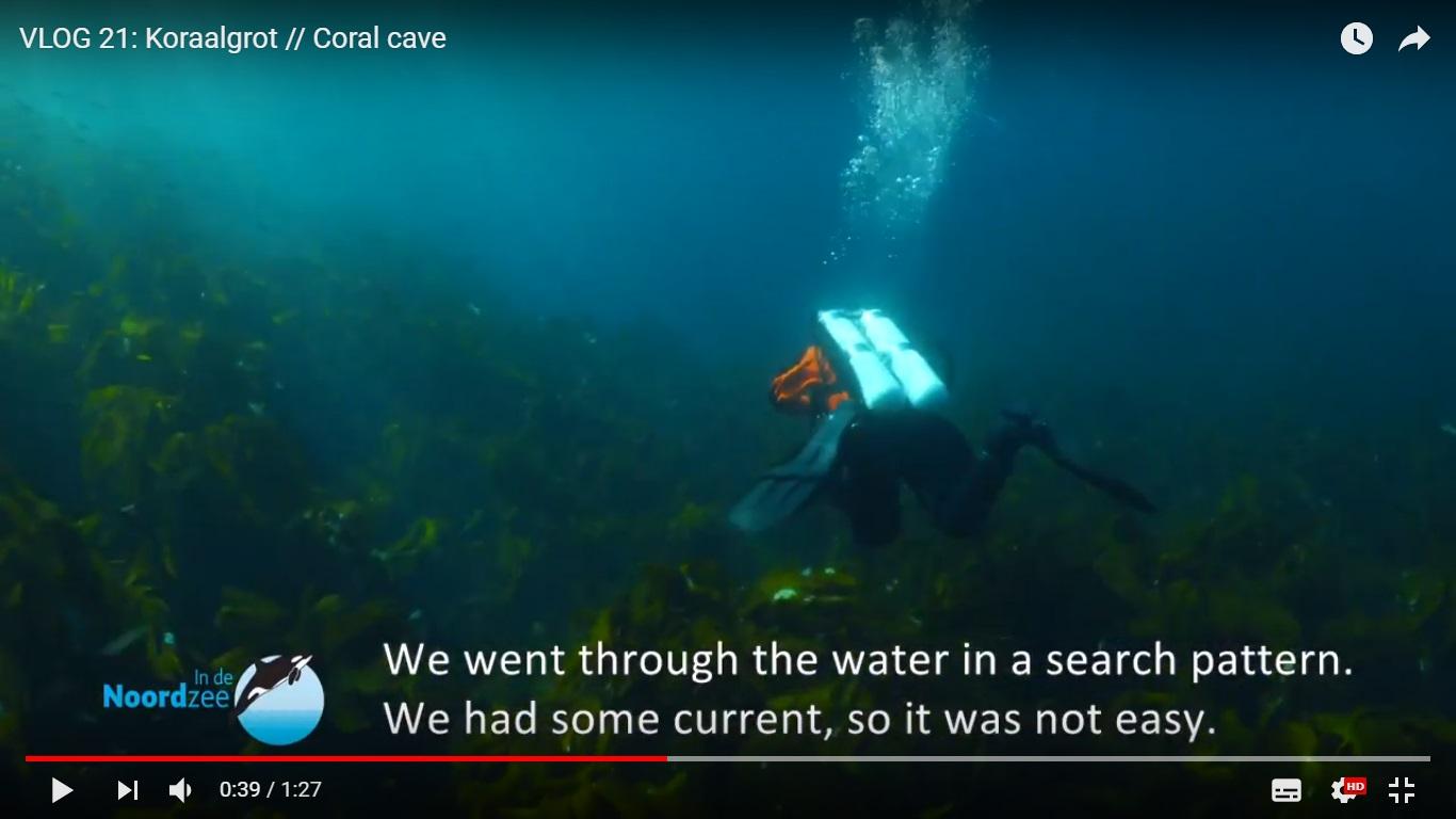 Vlog #5: Koraalgrot en zeehond