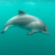 Opinie bij persbericht 'Uniek onderwaterbeeld bruinvissen'