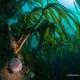 Tussen het kelp stikt het van het leven