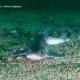 Hondshaai – kleine haaiensoort in onze Noordzee