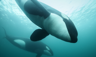 Orkafoto van In de Noordzee wint prijs