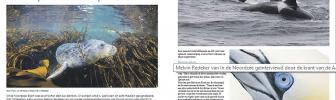 In de Noordzee in de Krant van de Aarde