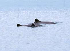 Noordzeetrip: vier bruinvissen en veel zeekoeten