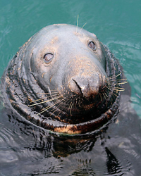 Zeehonden in de Noordzee