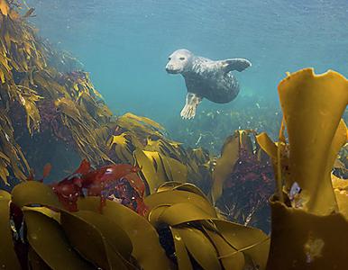 Duik met ons mee in de onderwaterbossen van de Noordzee. Bekijk het fotoverhaal & de video >>