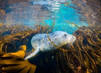 Zwemmen met een nieuwsgierige zeehond. Bekijk de video >>