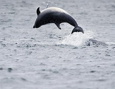 Kajakken met dolfijnen. Bekijk de video >>