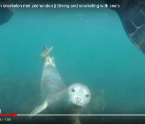 Noordzee vlog #3: Duiken en snorkelen met zeehonden