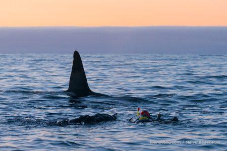 ©-Melvin-Redeker-snorkeling-orcas-fotolezing