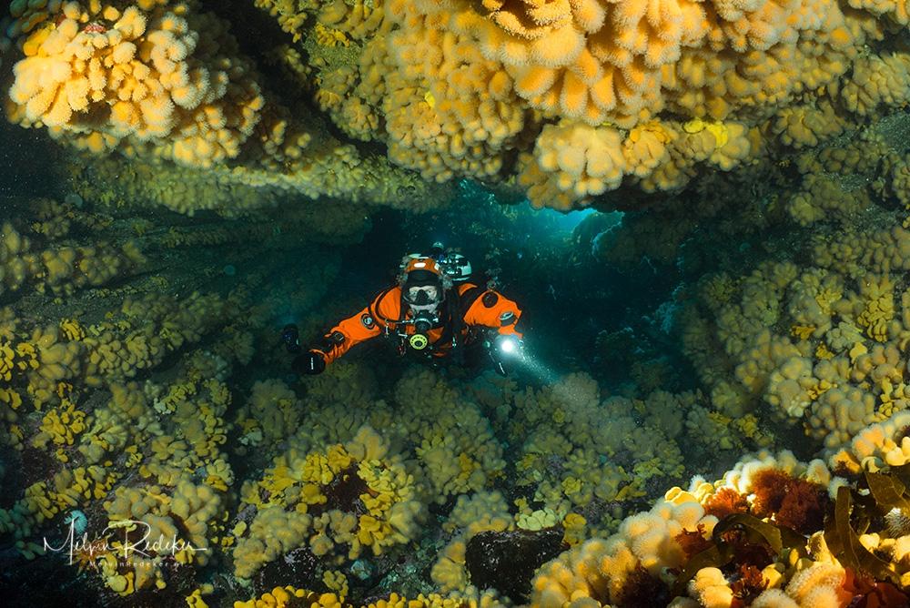 Duiken in een koraalgrot In de Noordzee